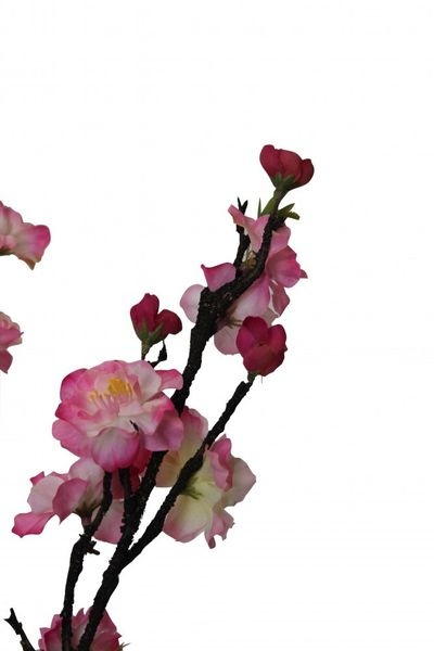 Peach Blossom Three Pink