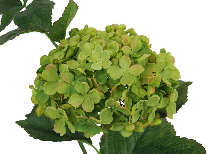Large Hydrangea Green