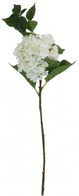 Large Hydrangea White
