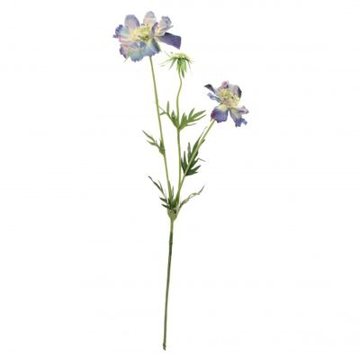 Scabiosa Light Blue