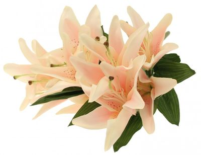 Lily Bush Light Pink