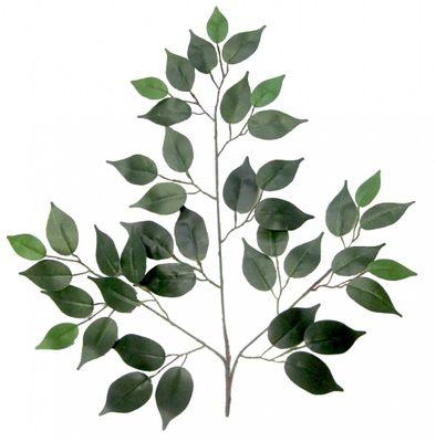 Green Ficus Branch (50cm)