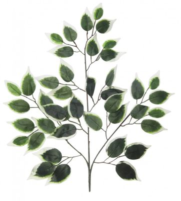 Variagated Green Ficus Branch (50cm)