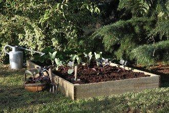 Forest Garden Raised Bed 100x100cm