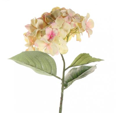 68cm Single Large Hydrangea Cream Blush