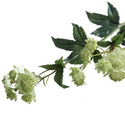 "Green Astranria (19.5"")"