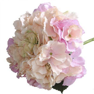 Blush Pink Hydrangea