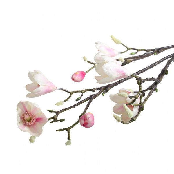 Magnolia with Pink Tips