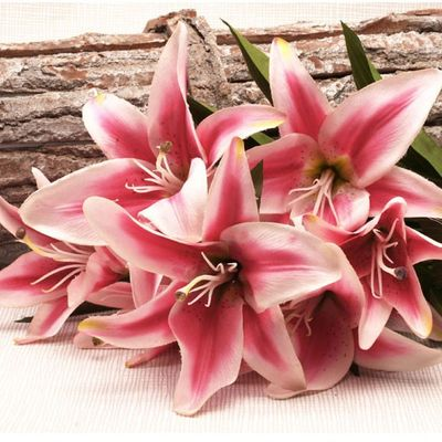 Dusty Pink Lily