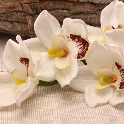 Real Touch Large Cymbidium White (36inch)