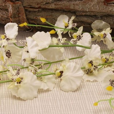 Dancing Orchid White