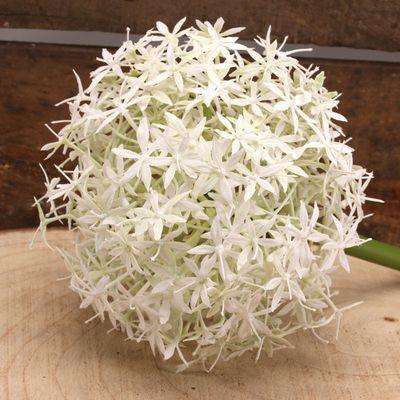 Allium Cream