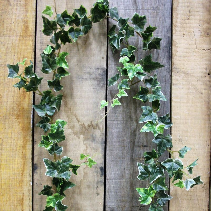Ivy Bushes and Garlands