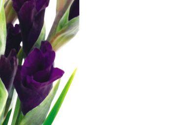 Gladioli Greeting Card