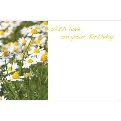 With Love On Your Birthday - Daisies Greeting Cards (x50)