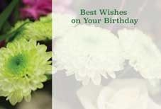 Best Wishes on Your Birthday - Chrysanth Greeting Cards (x50)
