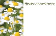 Happy Anniversary - Daisies Greeting Cards (x50)