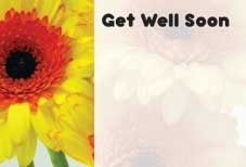 Get Well Soon - Yellow Gerbera Greeting Cards (x50)