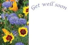 Get Well Soon - Blue/Yellow Flowers Greeting Cards (x50)