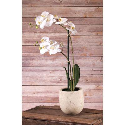 phalaenopsis spray