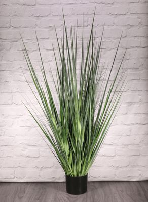 Potted Flat Grass