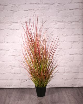 Potted Bronze Stipa Grass