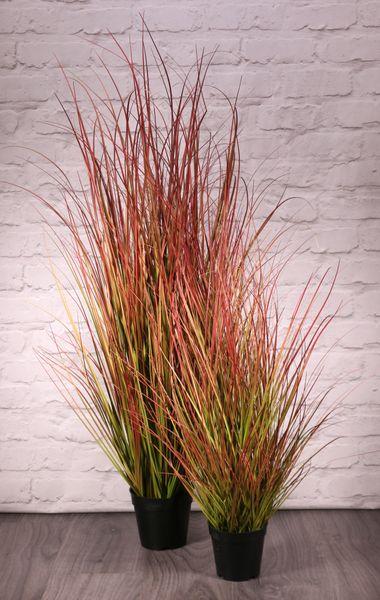 Potted Bronze Stipa Grass