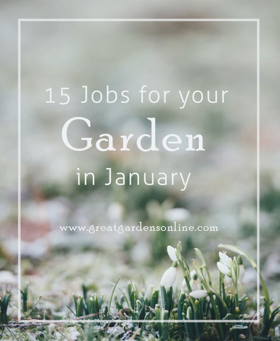15 Jobs for the Garden in January