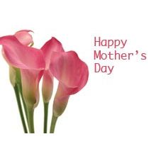 Happy Mothers Day - Pink Lily Greeting Cards